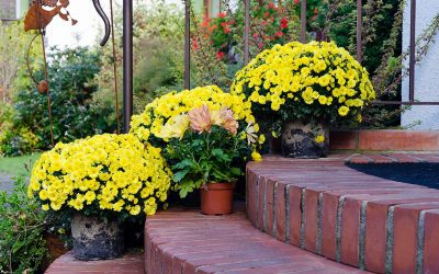 7 Easy Ways to Improve Curb Appeal for Your Home